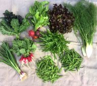 Veg box 3 small