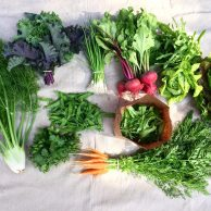 Veg box 1 large