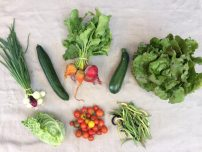 Veg box 6 small
