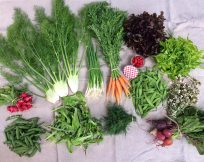 Veg box 2 large