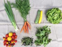 Veg Box 7 small