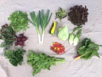 Veg box 8 large