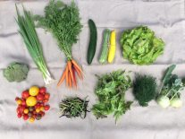 Veg Box 7 large