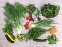 Veg box 5 large