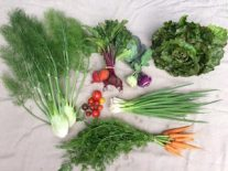 Veg box 5 small