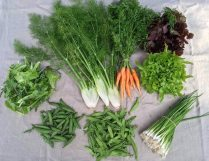 Veg box 2 small