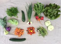 Veg box 6 large