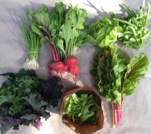 Veg box 1 small