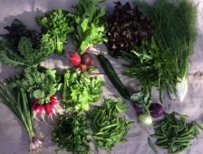Veg box 3 large